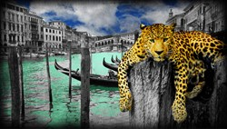 Hanging in Venice by Lars Tunebo - Paper On Board sized 35x20 inches. Available from Whitewall Galleries